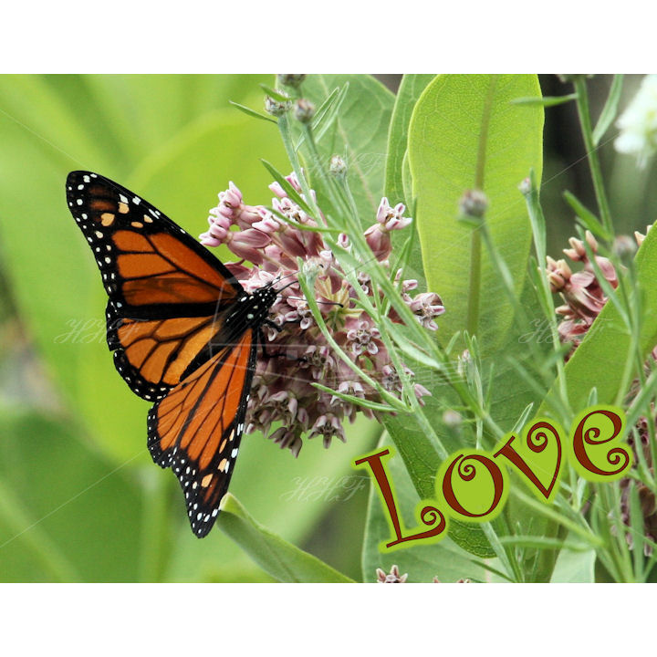 IMG 0123 top fold monarch Love 2nd edition 720 HHF