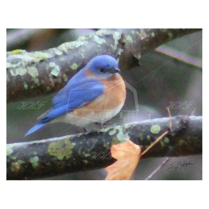 blue bird 1 oil painting card for sq HHF