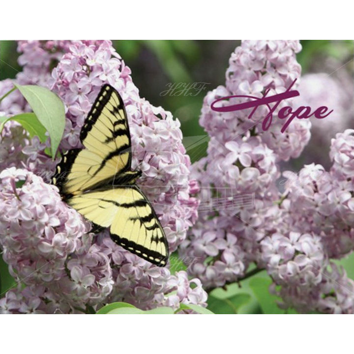hope butterfly 720 HHF