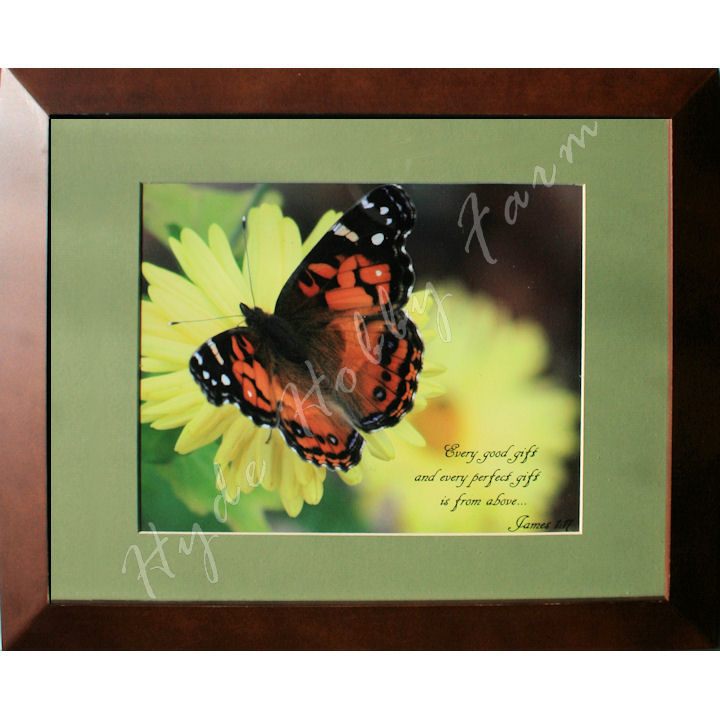 Good Gift butterfly 720 with HHF